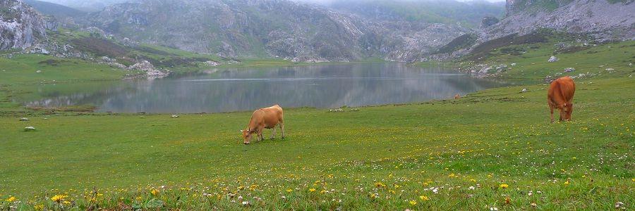 Lago de Enol en Covadonga